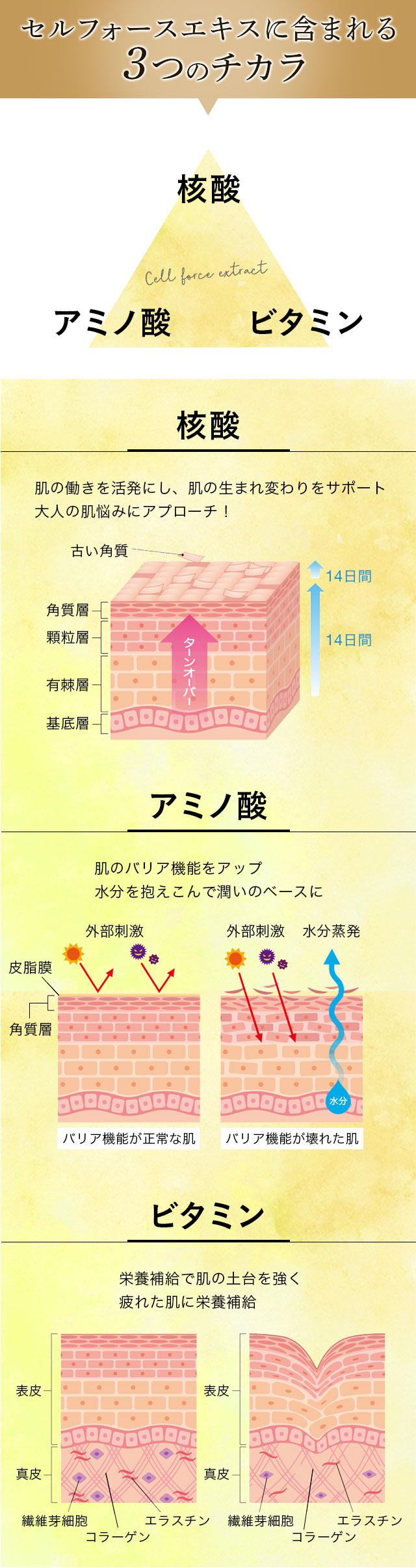 セルフォースエキスに含まれる3つのチカラ。核酸、アミノ酸、ビタミン